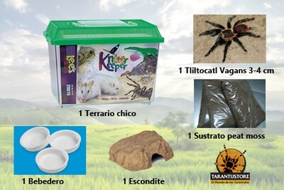 Kit COMPLETO para primer tarántula (Chico)