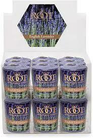 ROOT 20Hr Votive - English Lavender