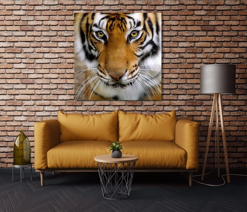 The Tiger  - Modern Luxury Wall art Printed on Acrylic Glass - Frameless and Ready to Hang