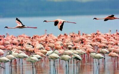 Santuario de flora y fauna Los Flamencos y Rancheria Wayuu