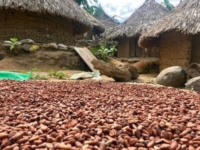 Cacao Organico al 72%