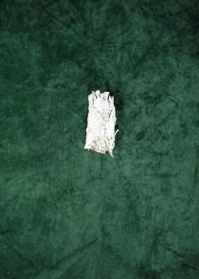 California Broadleaf White Sage Bundle - Small