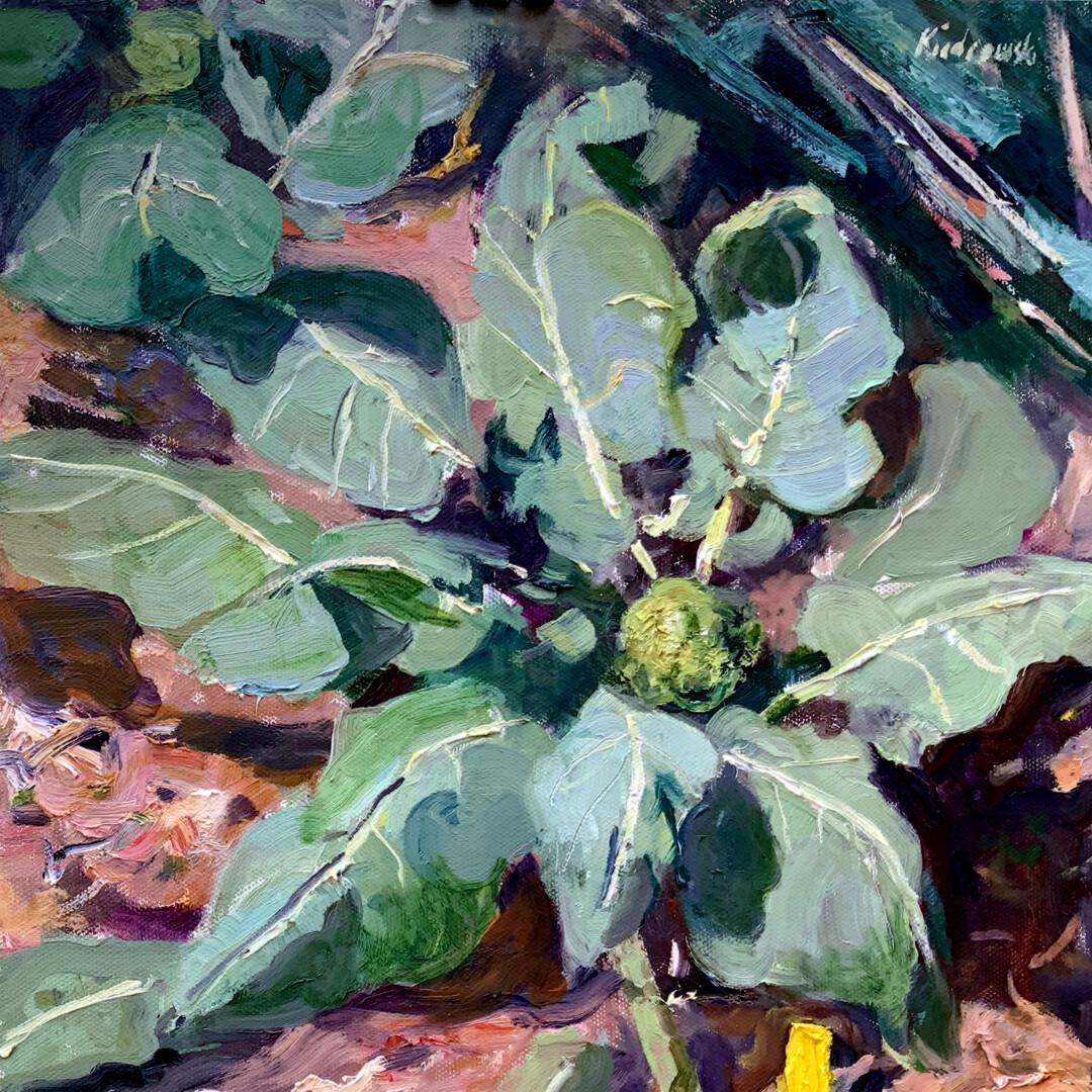 Broccoli Coming by Kraig Kiedrowski