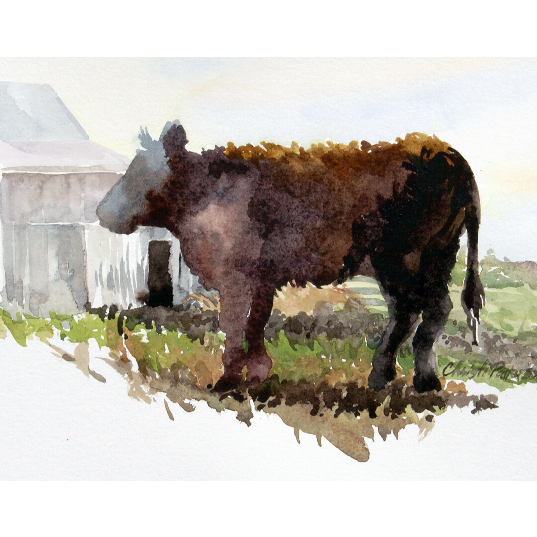 Young Cow In New Melle by Christi Patterson