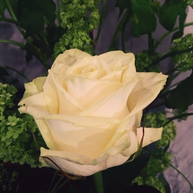 Bouquet de roses blanche