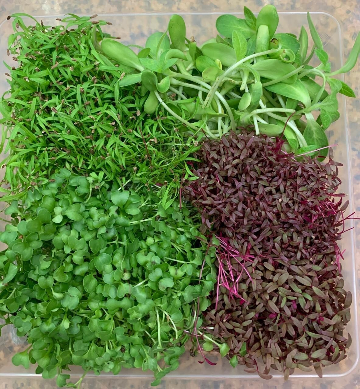 Organic Microgreens 200g (Assorted)
