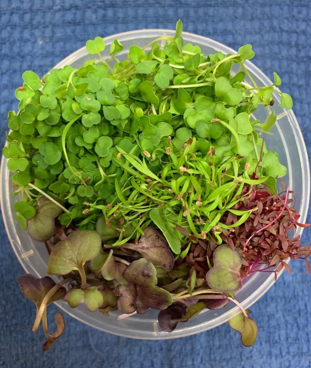 Organic Microgreens 100g (Assorted)