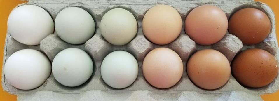 One (1) Dozen LG Eggs Pasture Raised, Non-GMO