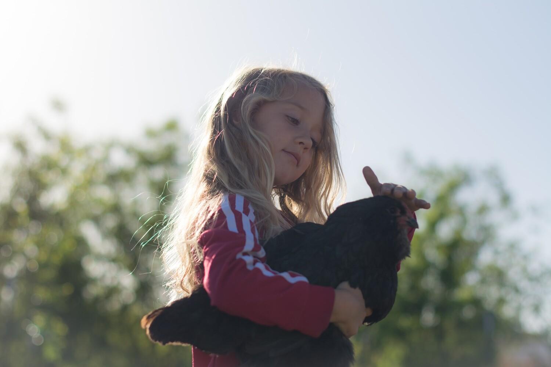 SPECIAL: Two (2) Dozen LG Eggs Pasture Raised, Non-GMO