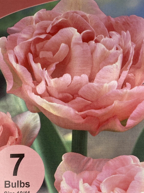 Tulip Double Pink Bulbs