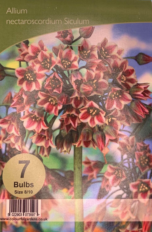 Allium Nectaroscordiurn siculum Bulbs