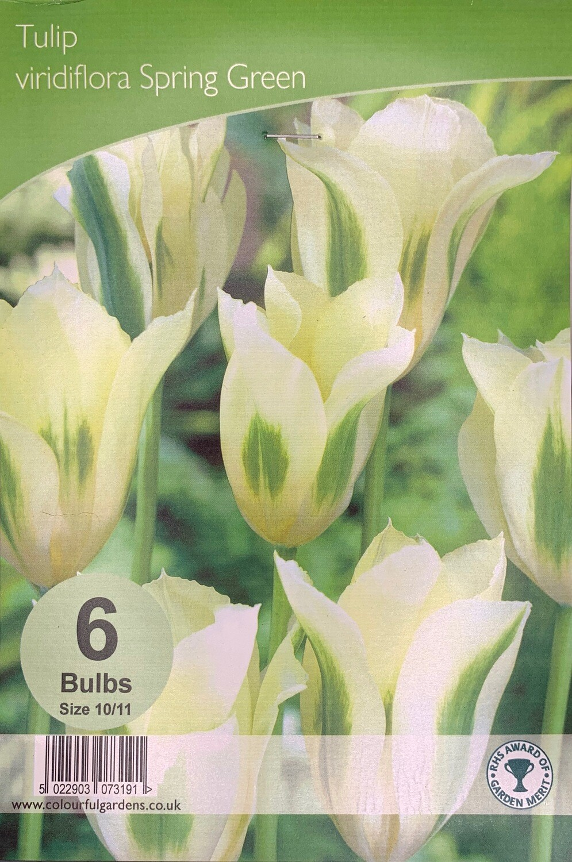 Tulip Viridiflora Spring Green Bulbs