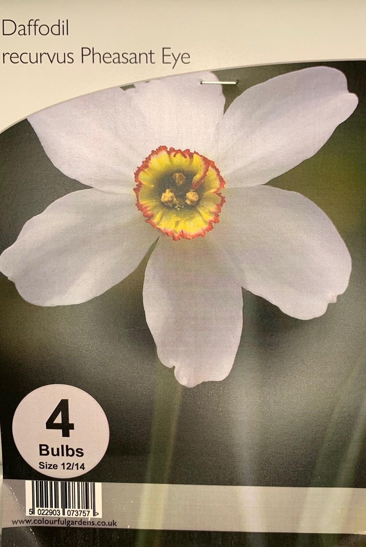 Daffodil Recurvus Pheasant Eye Bulbs