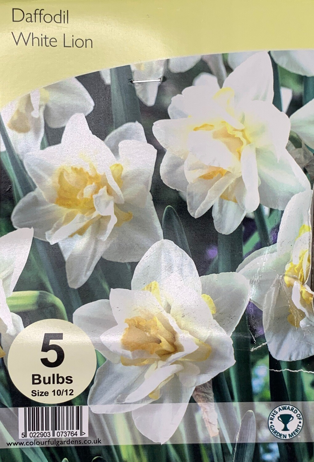 Daffodil White Lion Bulbs