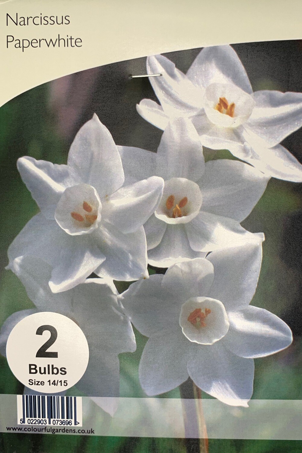 Narcissus Paperwhite Bulbs