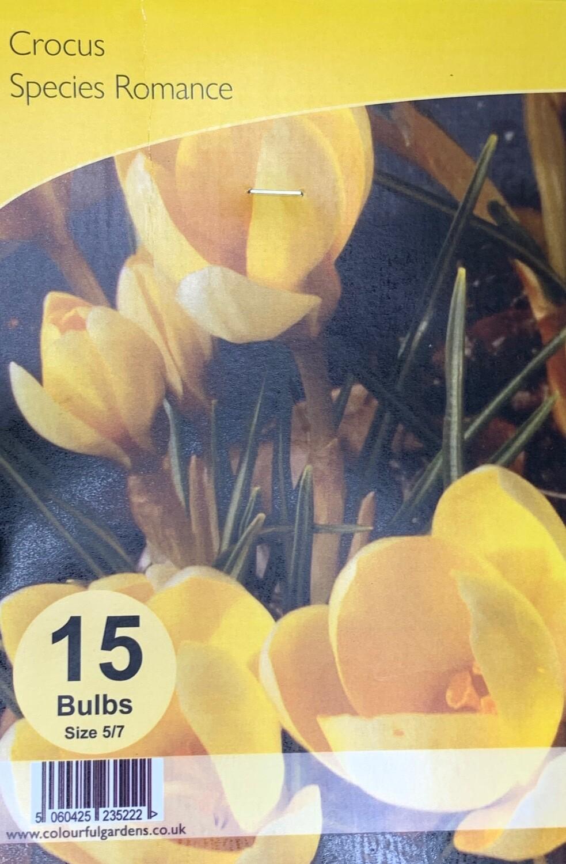Crocus Species Romance Bulbs