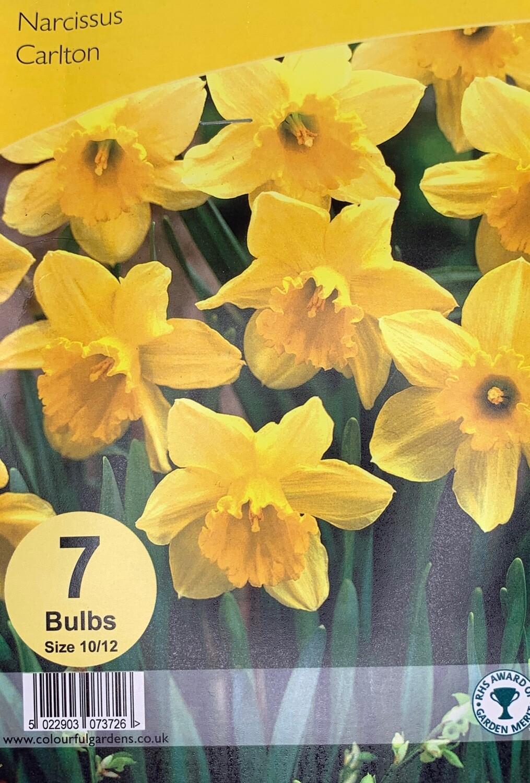 Narcissus Carlton Bulbs
