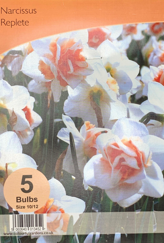 Narcissus Replete Bulbs