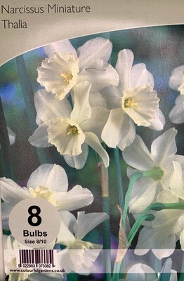 Narcissus Miniature Thalia Bulbs
