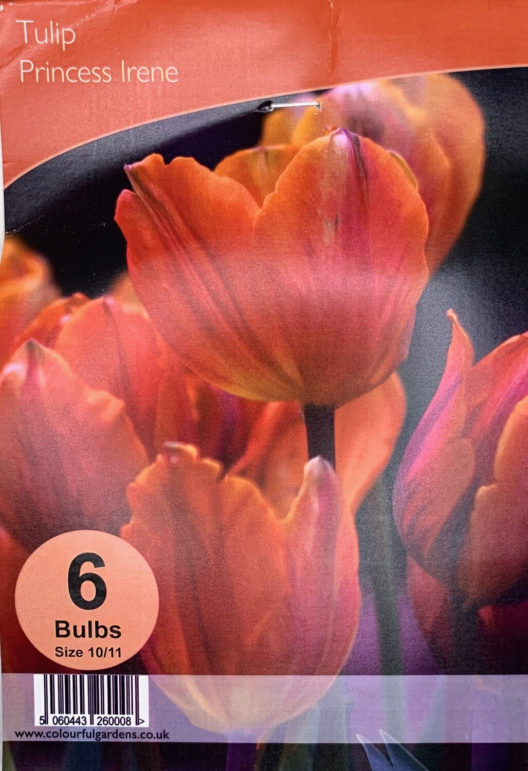 Tulip Princess Irene Bulbs