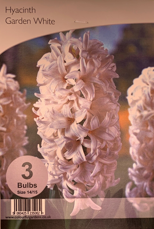 Hyacinth Garden White Bulbs