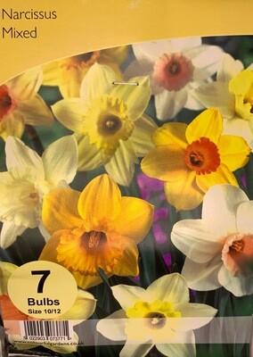 Narcissus Mix
