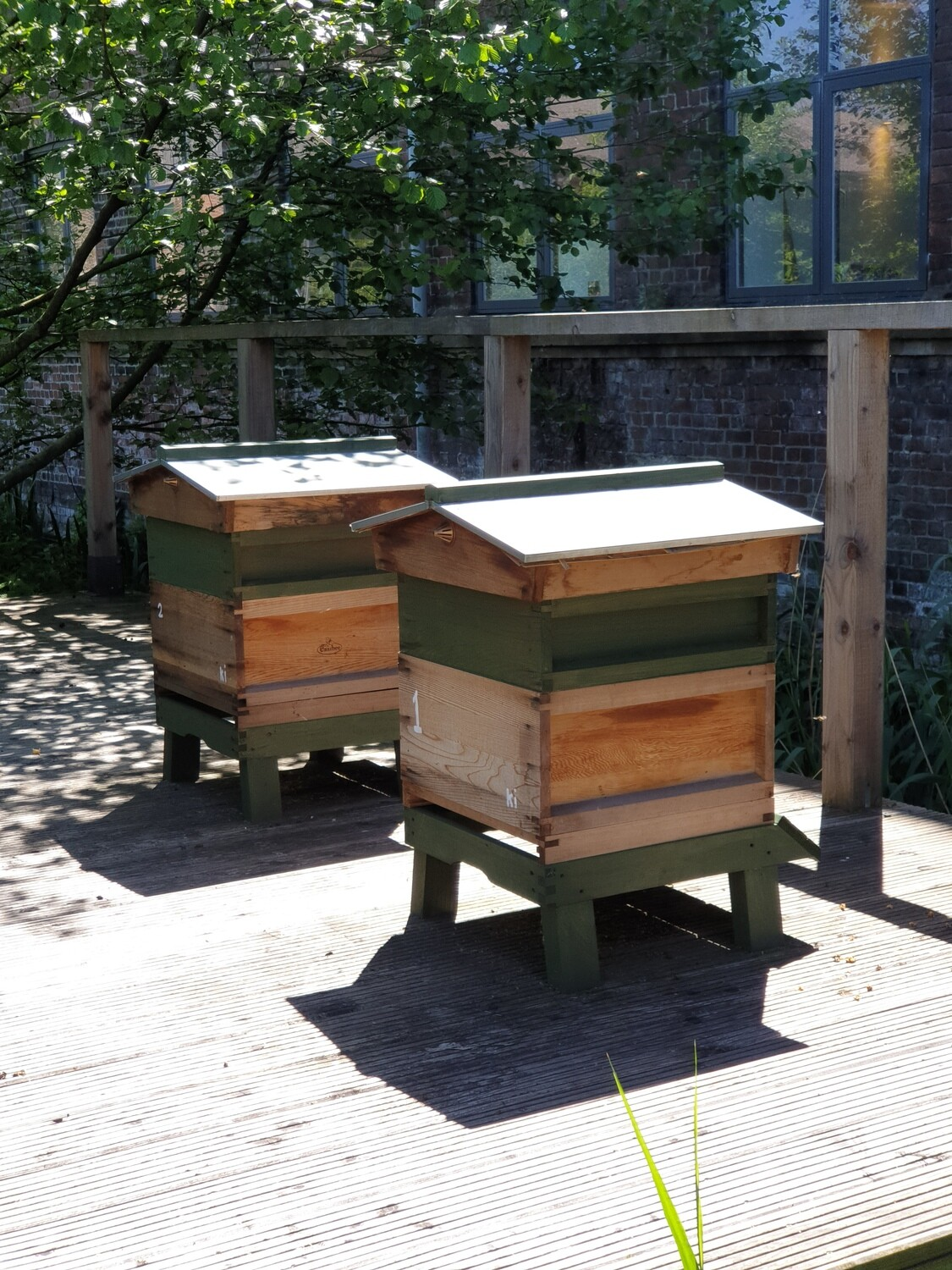Beekeeping Experience Full Day