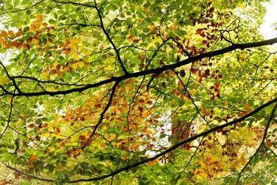 Autumn Start