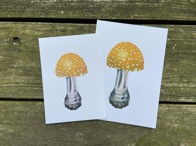 Yellow fly agaric mushroom Art print