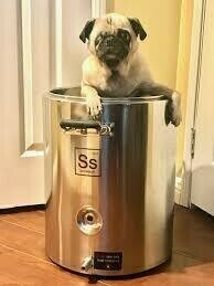 """Casita & Beer Study """"That'll do Pug!"""" Table Beer"""