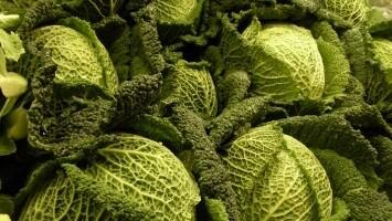 Savoy Cabbage. Large