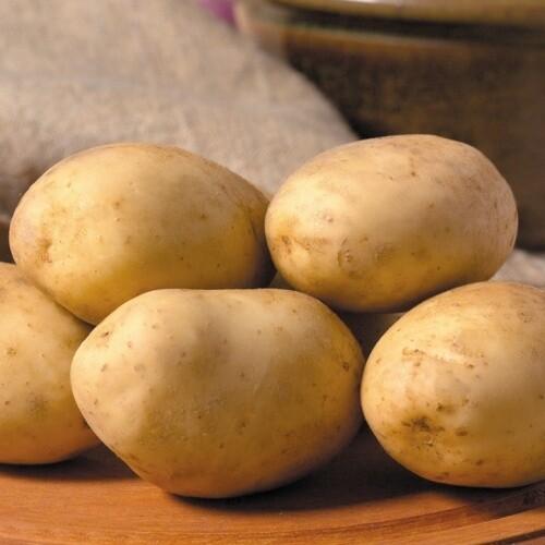 Baking Potatoes - Each