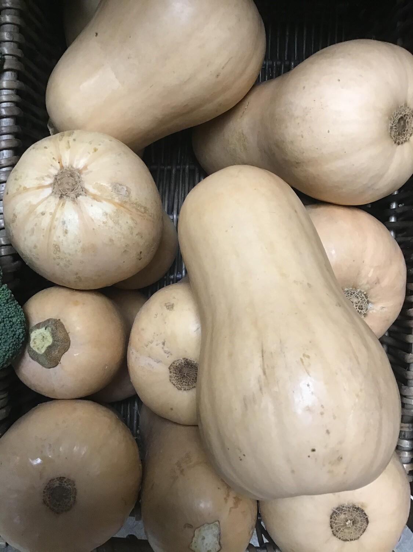Butternut Squash, Large