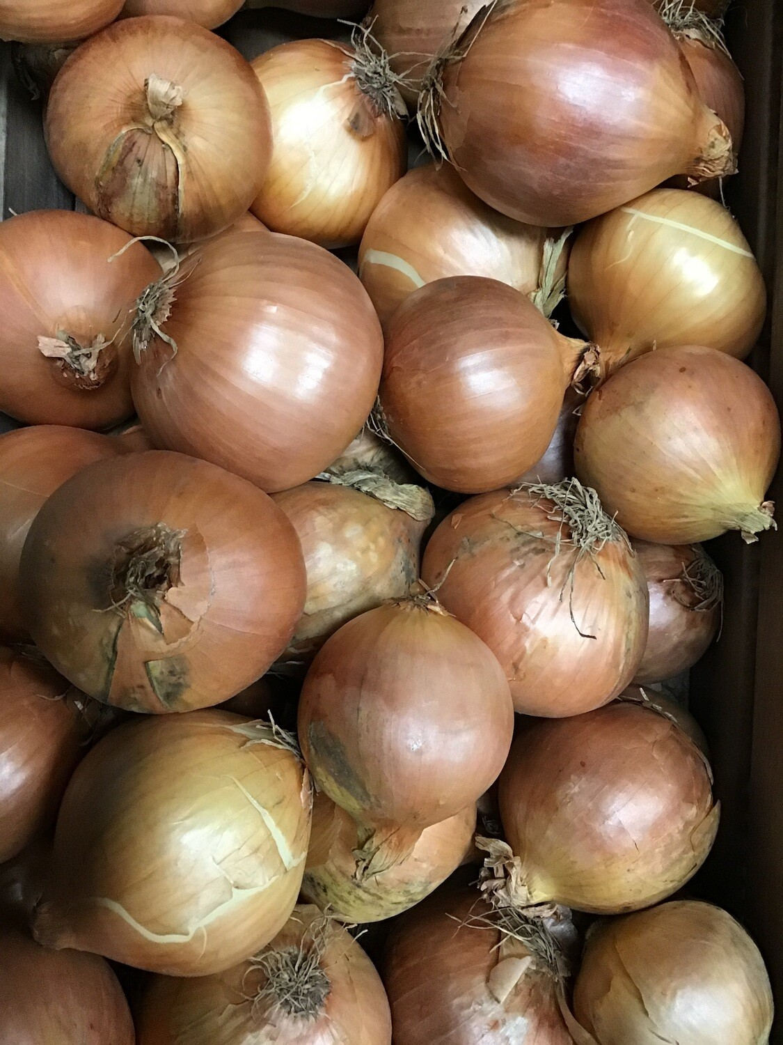 Brown onions 500g
