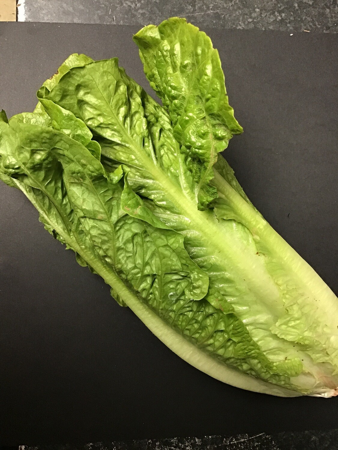 Romain/Cos Lettuce per head