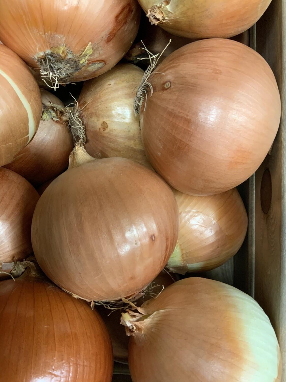 Spanish Onions each