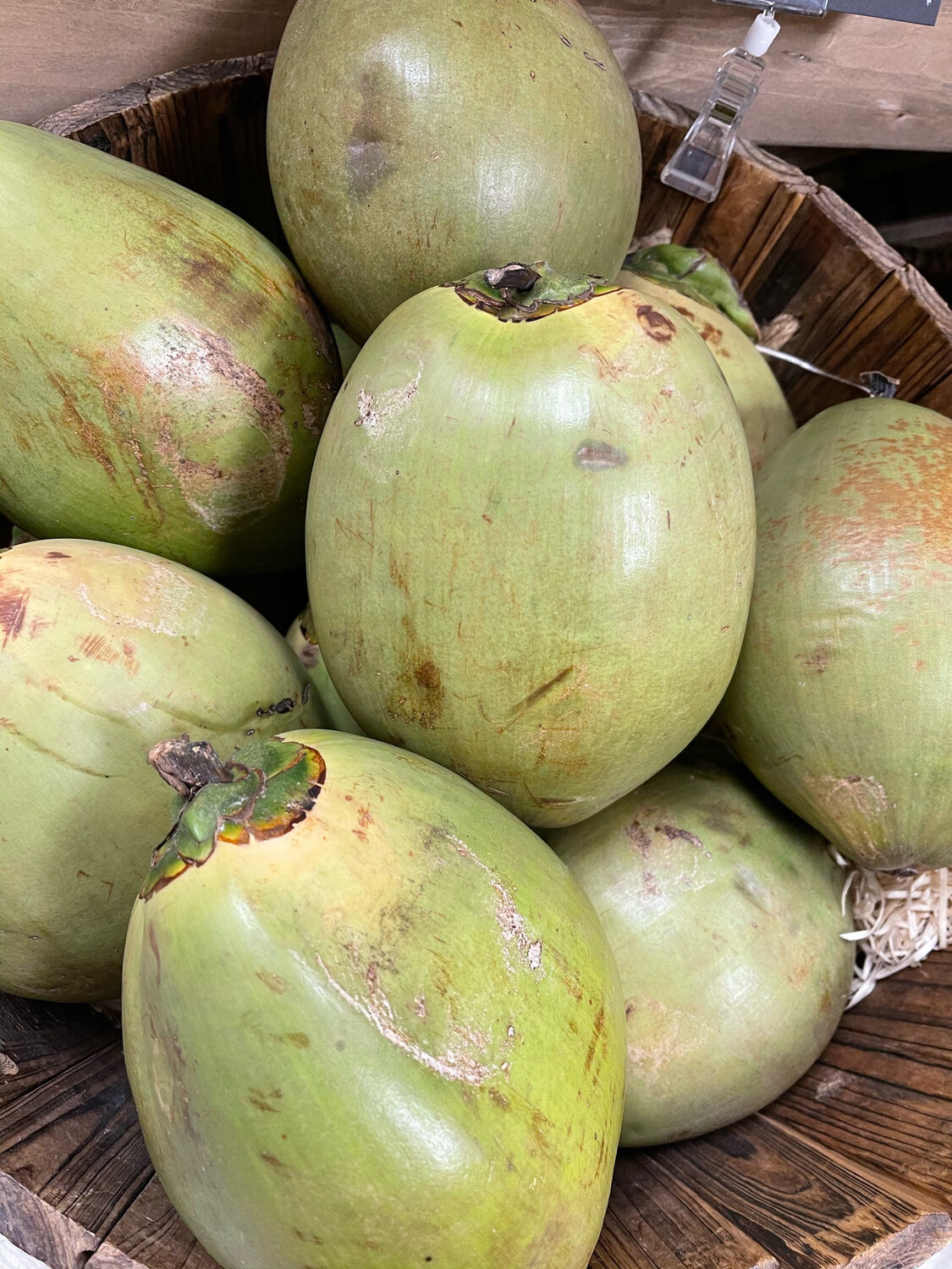 Jelly Nut Coconuts