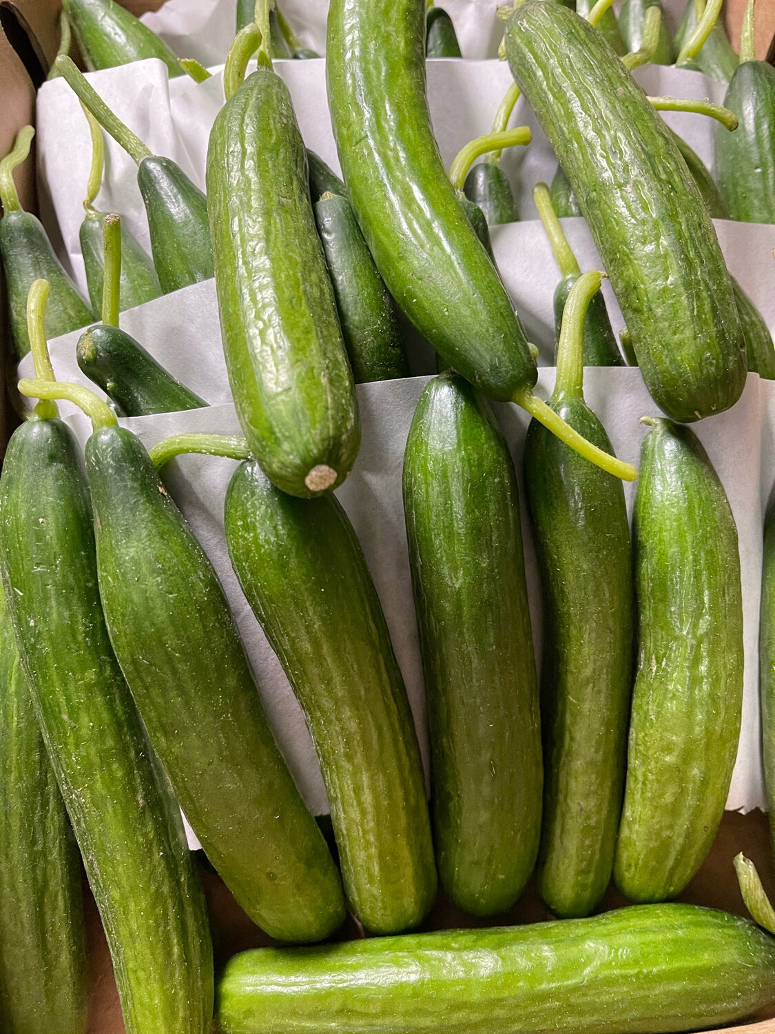 Baby Cucumbers pack of 3