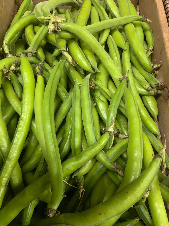 Italian Broad Beans- 500g