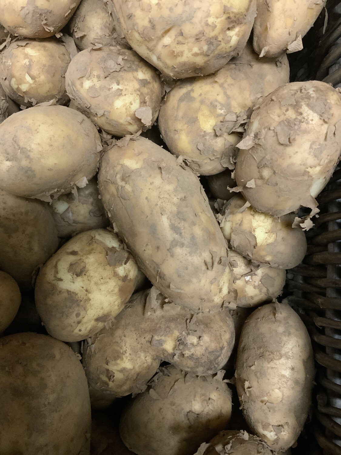 Lincolnshire New Potatoes.    500g