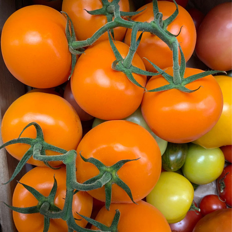 Orange Vine Tomatoes, 500g Pack