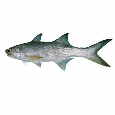Taila Fish ( Indian Salmon )