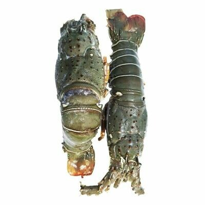 Lobster (Small)
