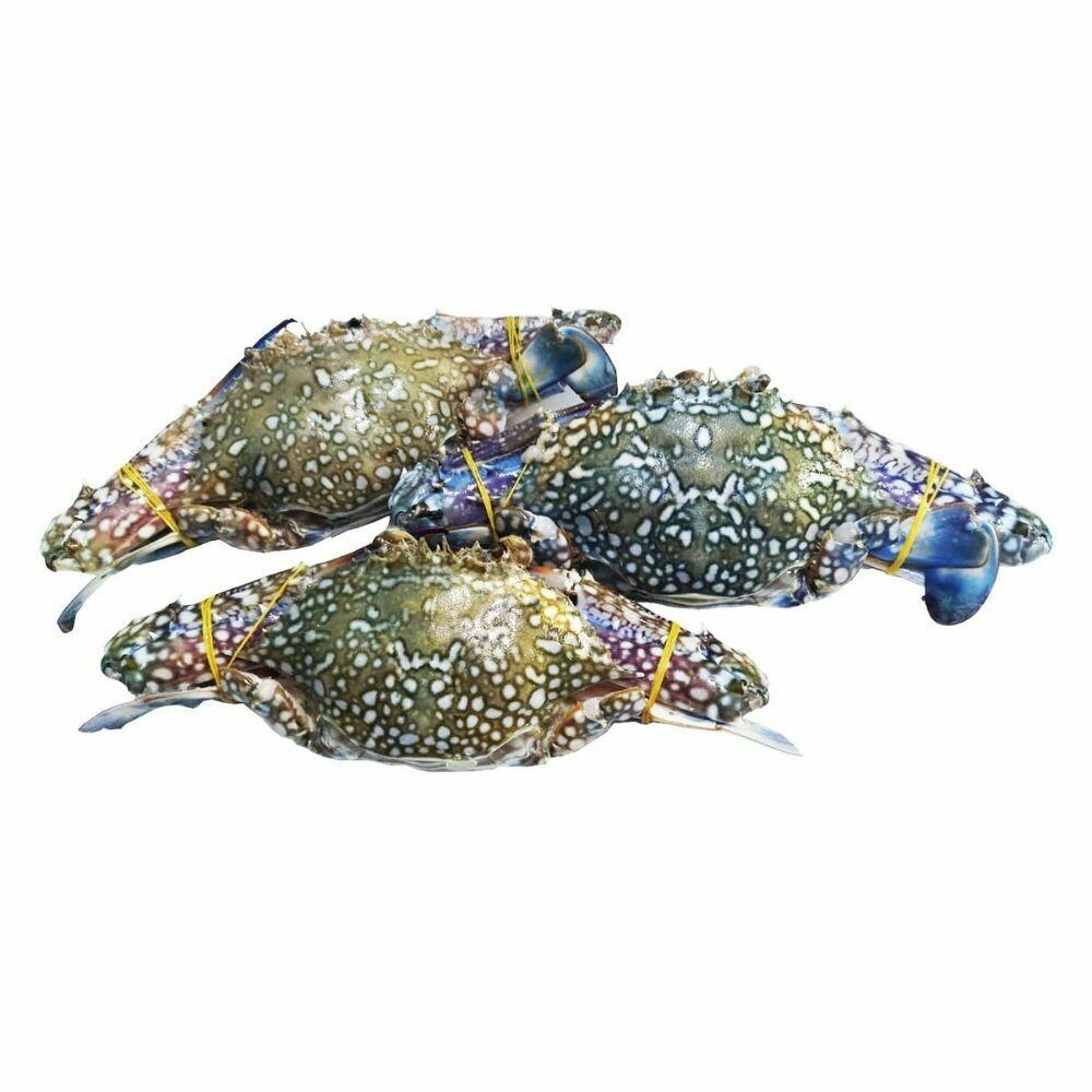 Sea Crab ( Small )