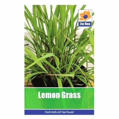 Lemon Grass Seeds (UK)