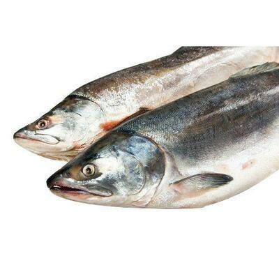 Salmon 1 LB