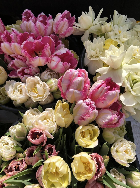 Spring Tulip miniCSA;  FRIDAYS @ Milk + Honey- Wildwood