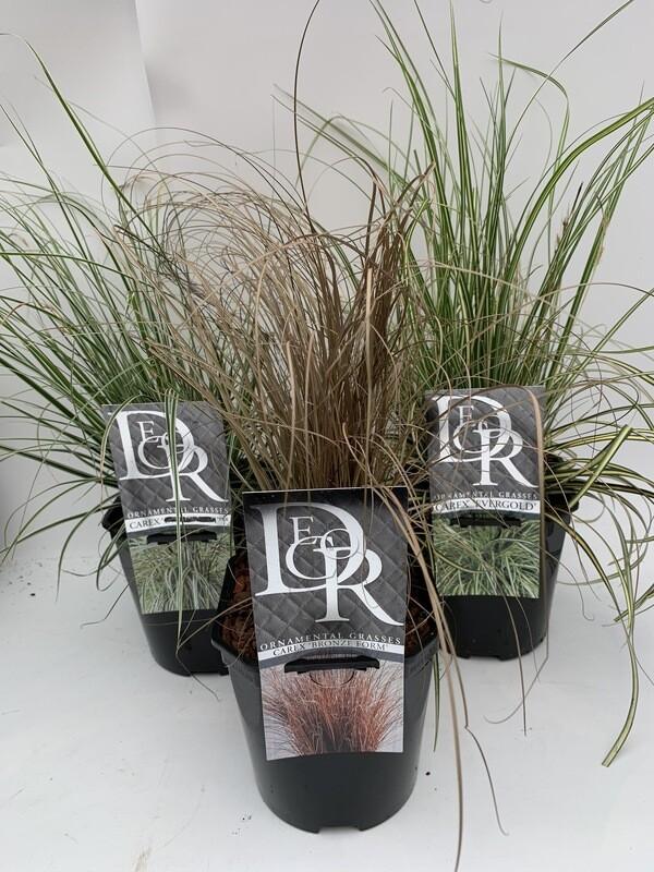 Grass Selection (3 Plants)