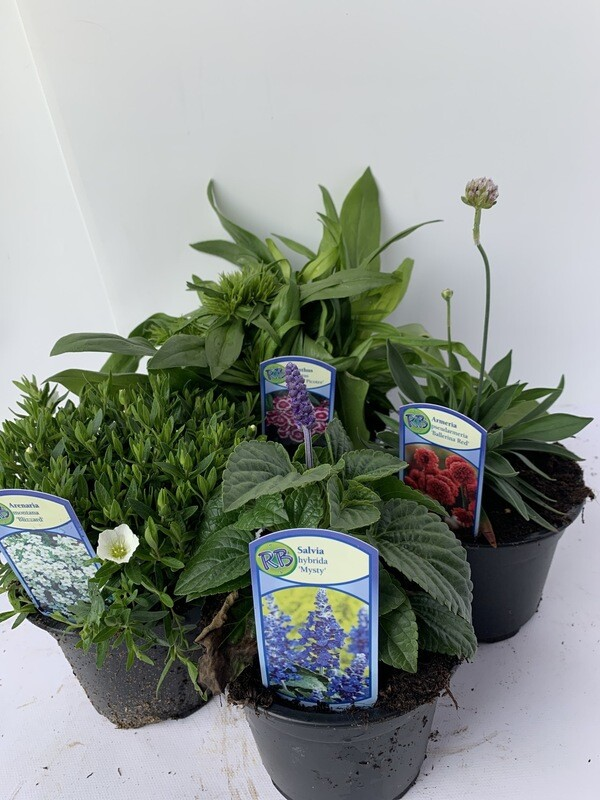 Herbaceous Selection