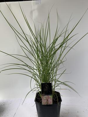 Miscanthus (mixed Varieties)